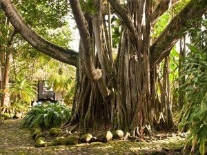 Exposición Botánica en Mariquita Tolima